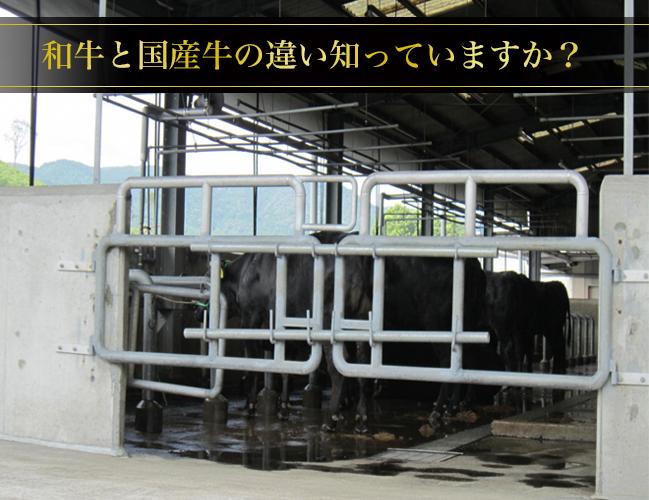 和牛と国産牛の違い知っていますか?
